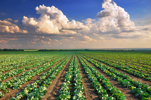 photo-agricultural-chemicals-catalysts